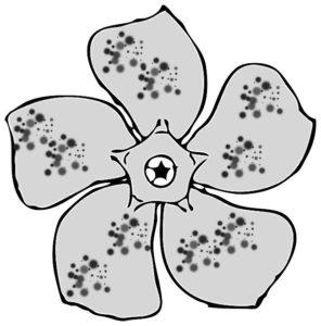Orchid spots