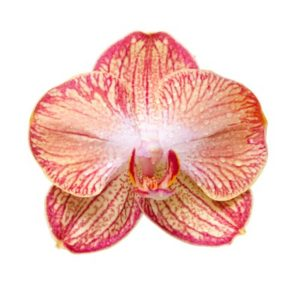 orchid09